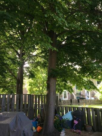 Tree Trimming Cover Photo
