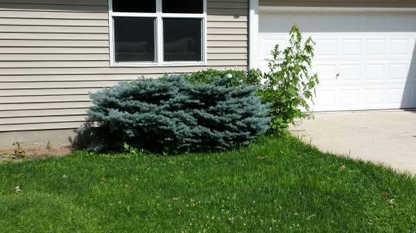 Tree And Shrub Removal  Cover Photo