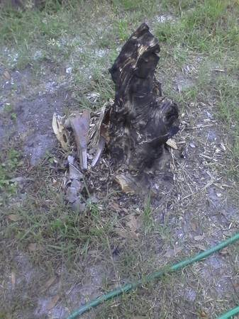 Palm And Tree Stump Removal Cover Photo