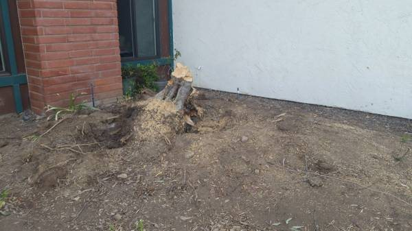 How To Remove a Small Tree