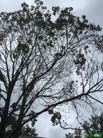 Tree Cut Down Asap  Cover Photo