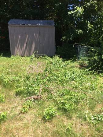 Need 3 Piles of Brush Removed From Yard Cover Photo