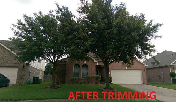 Trees Trimming  Cover Photo