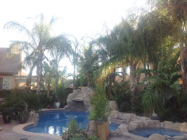 Need Queen Palms Trimmed up  Aprox 25 Trees-10 Birds of Paradise  Cover Photo