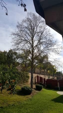 Best Price Tree Service