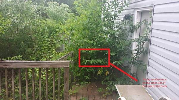 Need Area Around Home Cleared Of Weeds Tree Branches Etc. Cover Photo