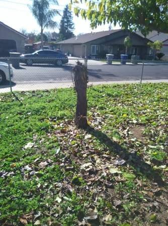 Remove Tree Stumps Cover Photo