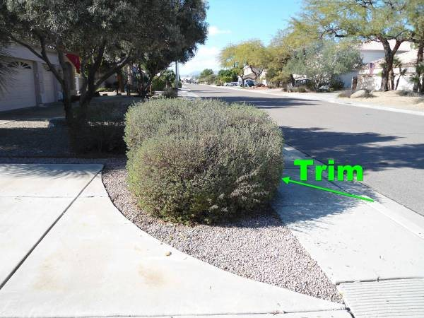 Landscaping Shrubs Trimming now Then Weekly Yard Maintenance Cover Photo