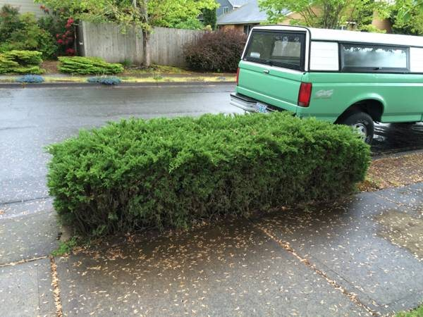 Someone To Cut Down And Haul Away Bush By Sidewalk  Cover Photo