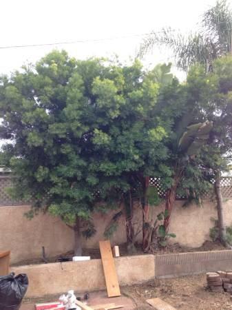 Cost Tree