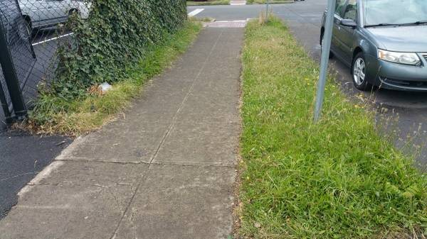 Pressure Wash This Sidewalk Cover Photo