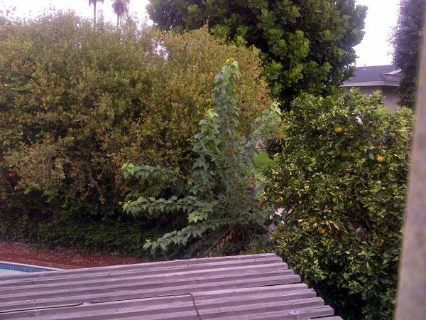 Tree Removals Cover Photo