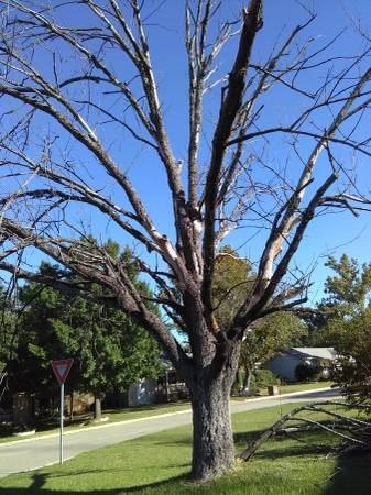 remove Trees Cover Photo