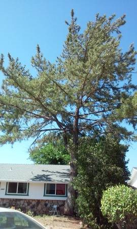 Cost To Remove Tree