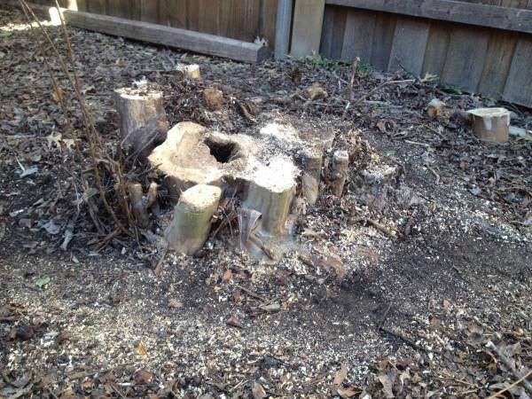 Stump Needs Grinding Cover Photo
