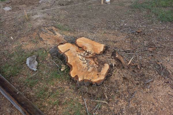 Stump Grinding Cover Photo