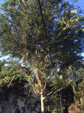 tree Trimmer Cover Photo