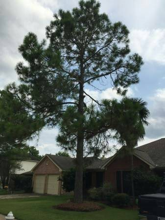 Tree Services Cover Photo