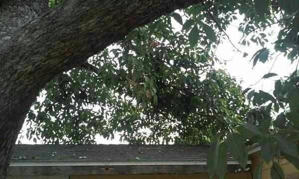 Need Tree Trimming Removal Cover Photo