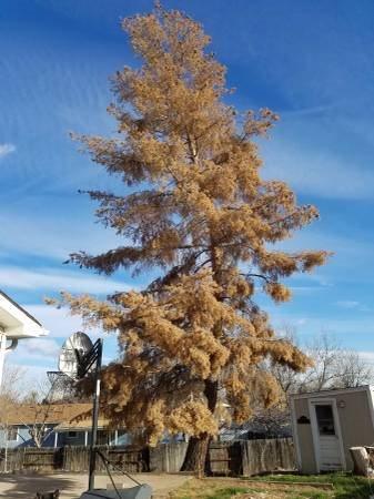 Oak Tree Cost