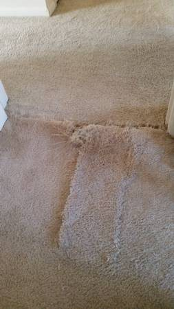 How Much Carpet Cost