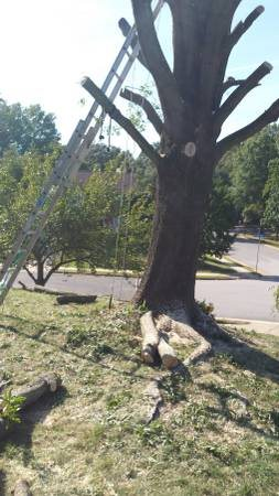 How Much is Tree Trimming