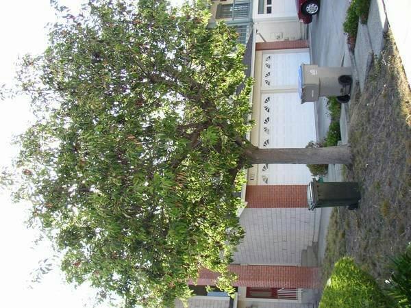 Tree Removal Estimate