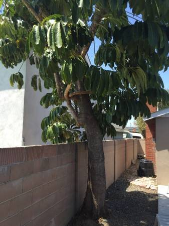 Two Trees And old Shed To be Removed Cover Photo