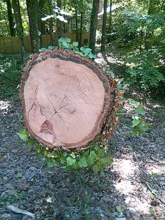 Need a Large Tree Trunk Milled or cut Into Workable Size Cover Photo