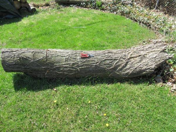 Tree Stump  Cover Photo