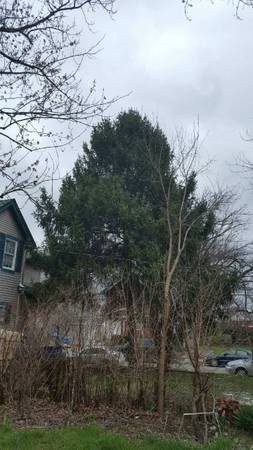 Tree Removal Estimate Cover Photo