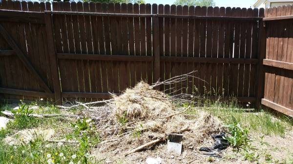 Move Small Brush Piles From Yard Cover Photo
