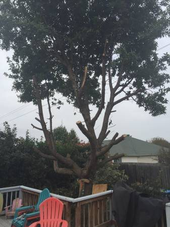 Recently cut Down big Tree  Need Hauled Away Cover Photo