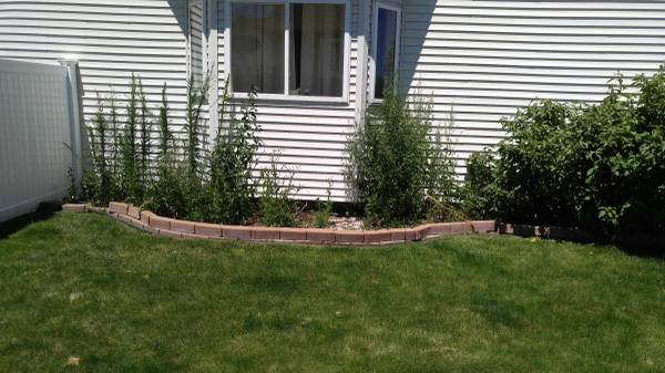 Small Landscaping Job Cover Photo
