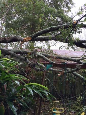 Tree Pruning Cost