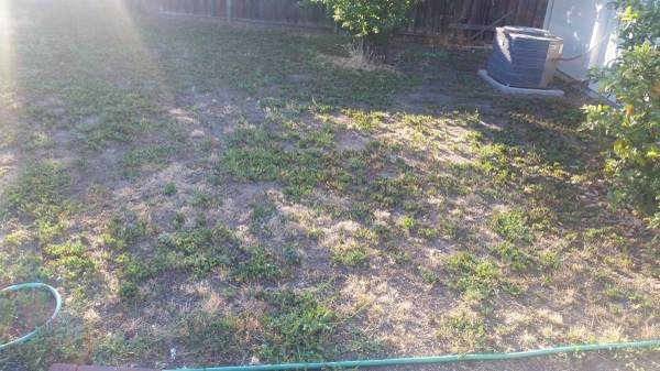 Clear Backyard Of Weeds  Cover Photo