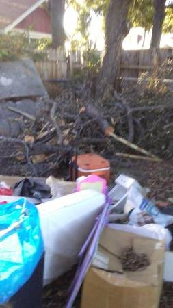 cut Down Tree Trunk haul off Brush Cover Photo