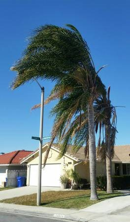 2 Palm Trees For Trimming or Removal Cover Photo