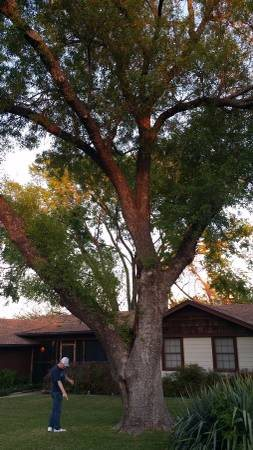 I Need Help Removing old Tree Cover Photo