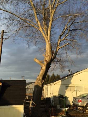 Tree Removal Cover Photo
