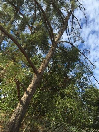 Large Tree Removal  Cover Photo