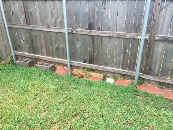 Need  Picking Up Lawn Debris Cover Photo