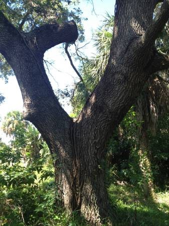 Cost For Tree Trimming