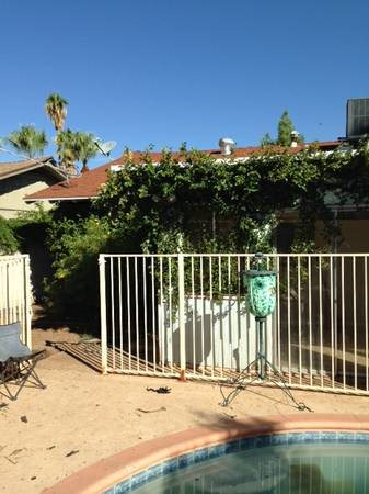 Palm Tree Removal And Landscaping  Cover Photo