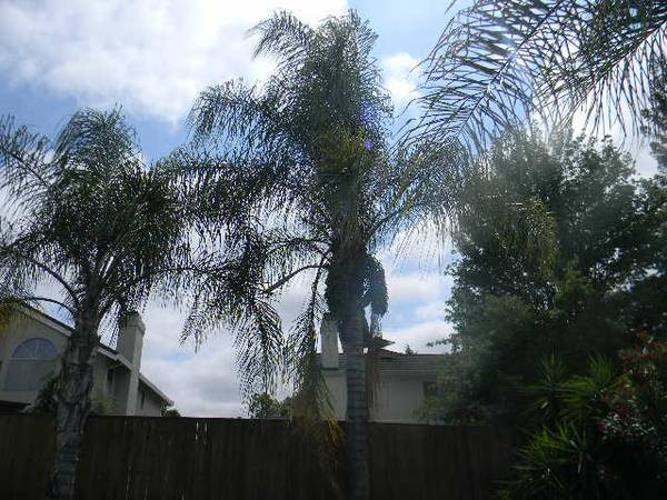 Palm Tree Trimming  Cover Photo
