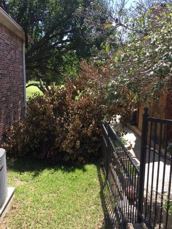 Large Tree Branch Needs Removal Cover Photo