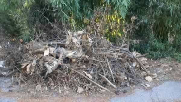 Haul OFF Tree Yard Debris Cover Photo