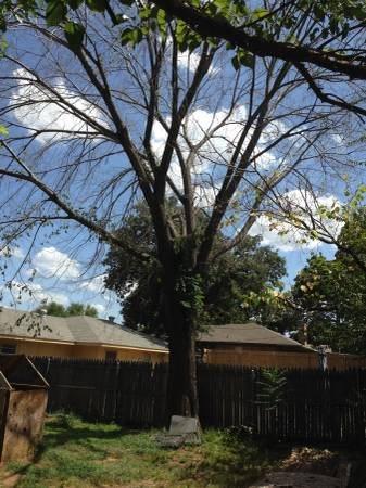 Dead Tree Cut Down Cover Photo