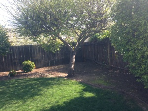 Backyard Renovation Cost