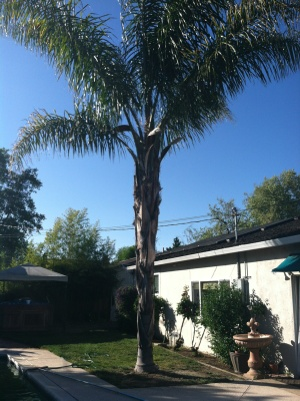 Palm Tree Removal Cover Photo